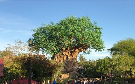 big tree at Animal Kingdom 1