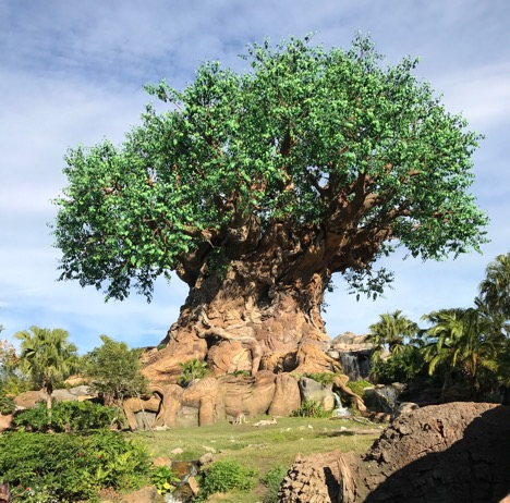 big tree at Animal Kingdom 2