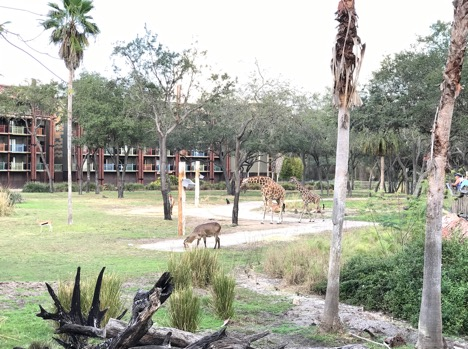 many animals you can see at Animal Kingdom Lodge Hotel
